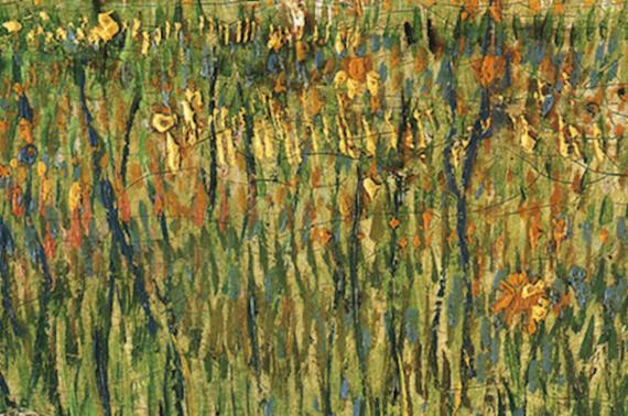 grass-thumb-570x378-116564